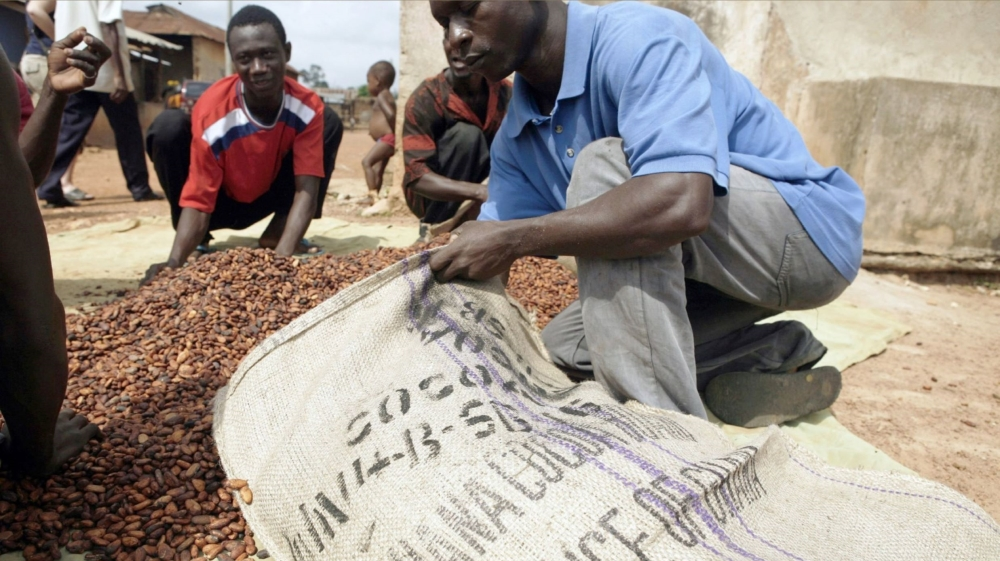 Chocolate danger: Ghana's cocoa output hit hard by dry, hot winds