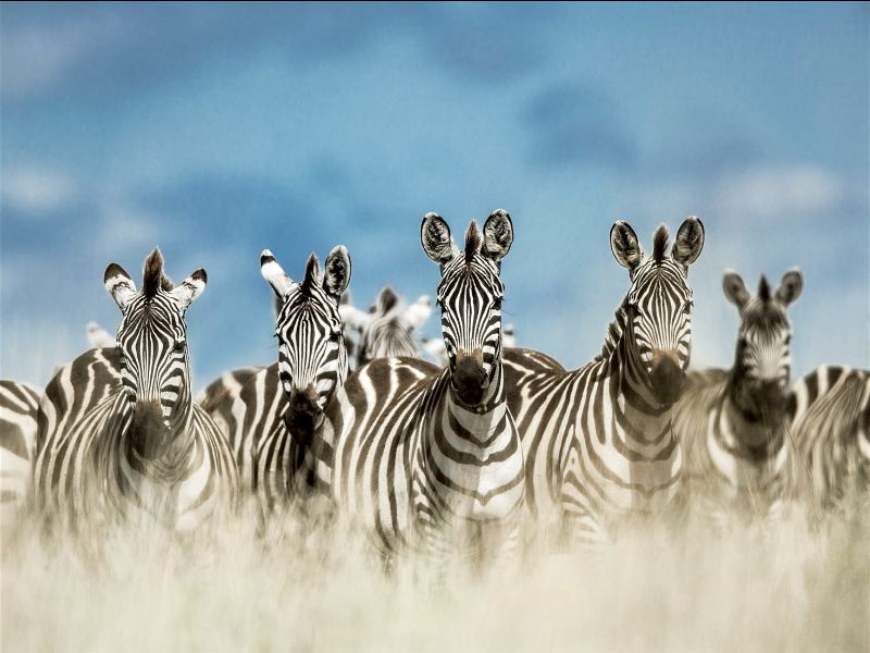Tanzania Cements its Status as One of the World's Best Tourism Destinations