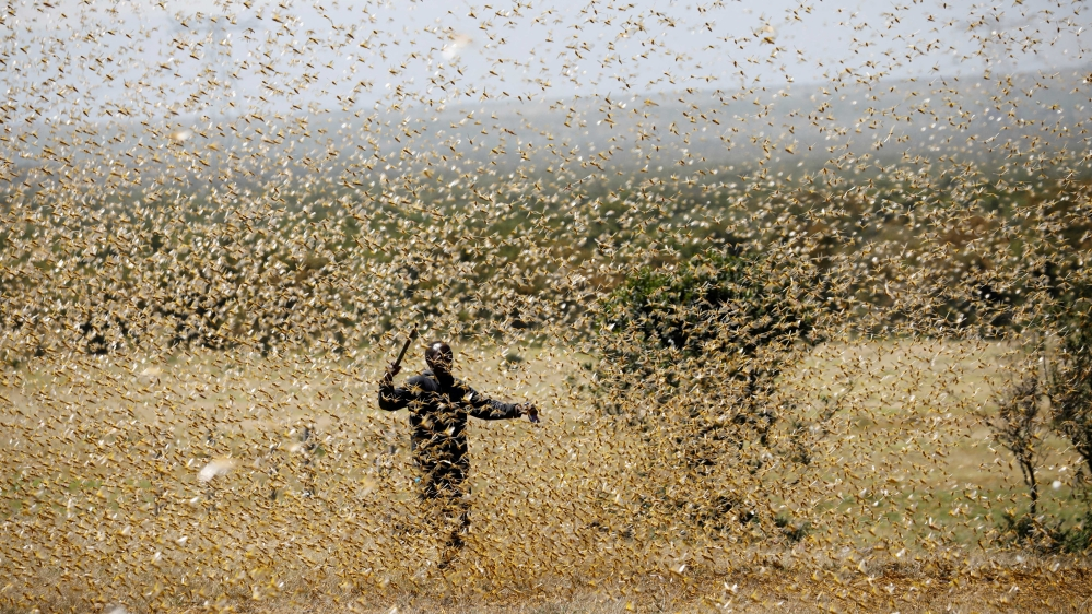 A second wave of locusts is about to wreak havoc in East Africa