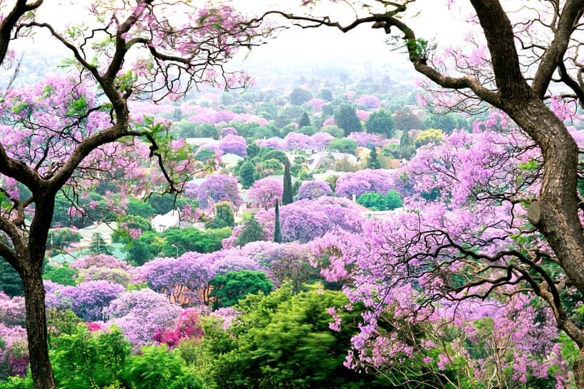 The Best Blooms in Africa