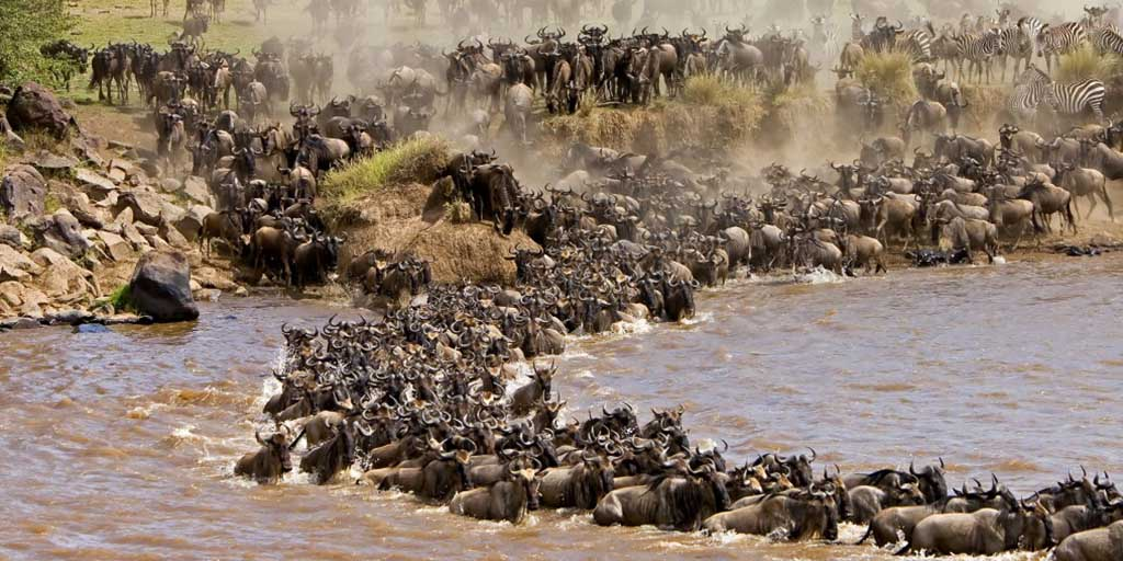 Kenya: As wildebeest migrate, few tourists to witness nature's theatre