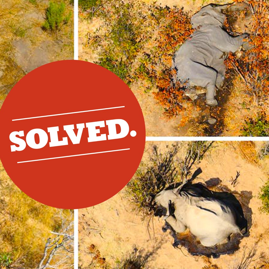 Mysterious Death of 350 Elephants in Botswana Has Been Solved