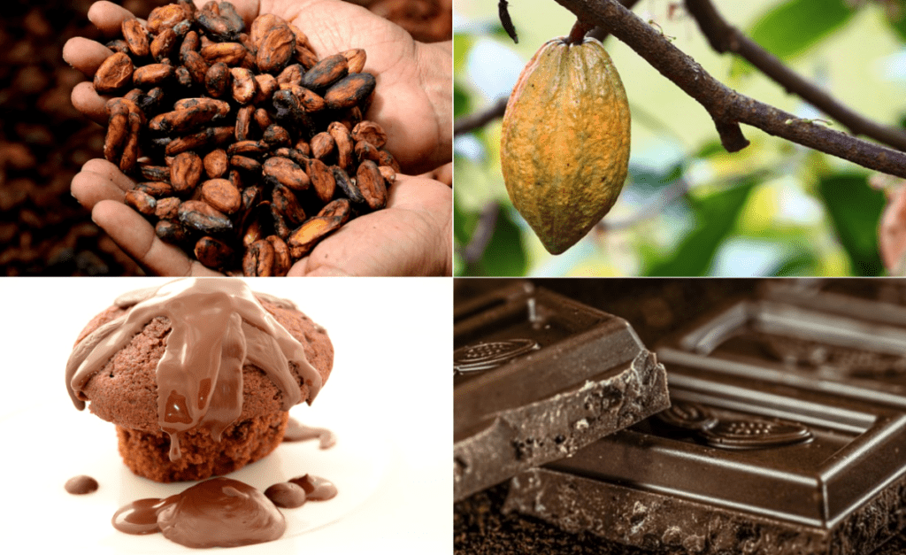 A Sweet Deal for Ghanaian Farmers as Cocoa Prices Hiked