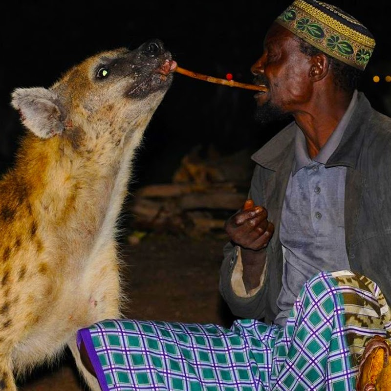 You Wouldn't Believe How this Fearless African Men of Ethiopia Feed Hyenas