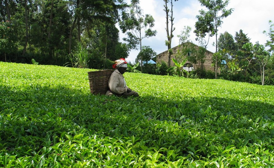 Kenya: Parliament Finally Passes Much Awaited Tea Bill