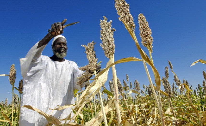 Why 2021 Must Be The Nutrition Year of Action in Africa