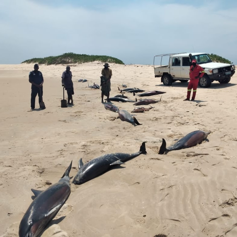 Mystery Continues to Surround More than 100 Dolphins Found Dead on African Beach