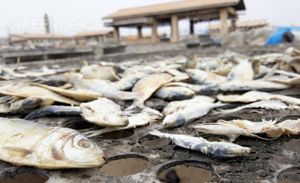 Fishmeal, Oil Exports to Europe Hurt Food Security in West Africa