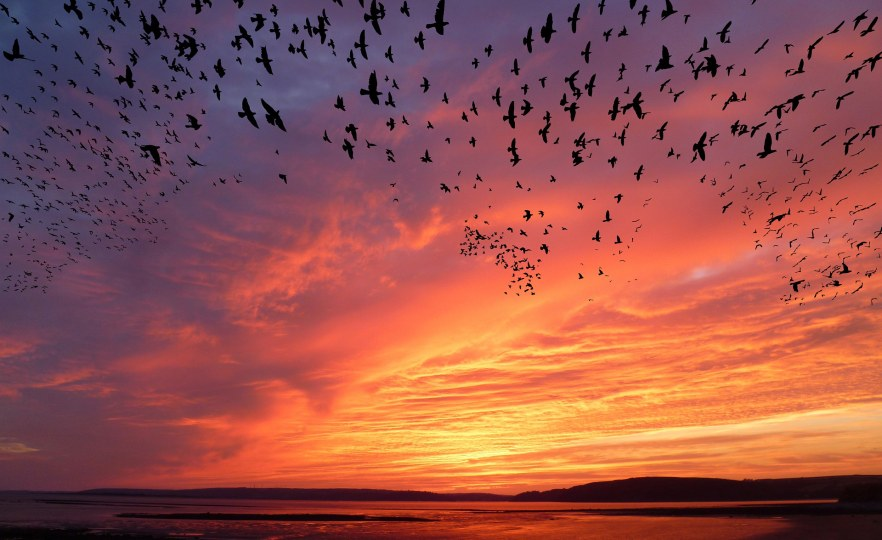 South African Bird Die-Off a Sign of Climate Crisis – Scientist